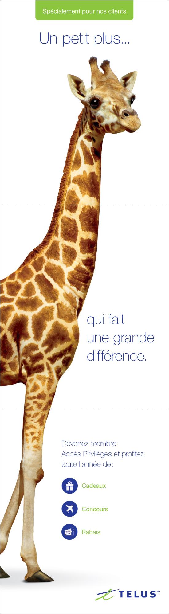 TELUS_Giraffe2